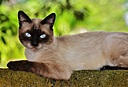 Cat by Pedro Mx in Member Albums