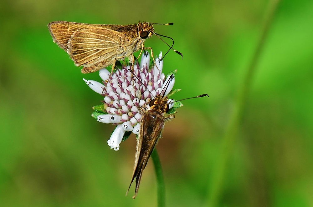 Two skippers by Pedro Mx in Member Albums