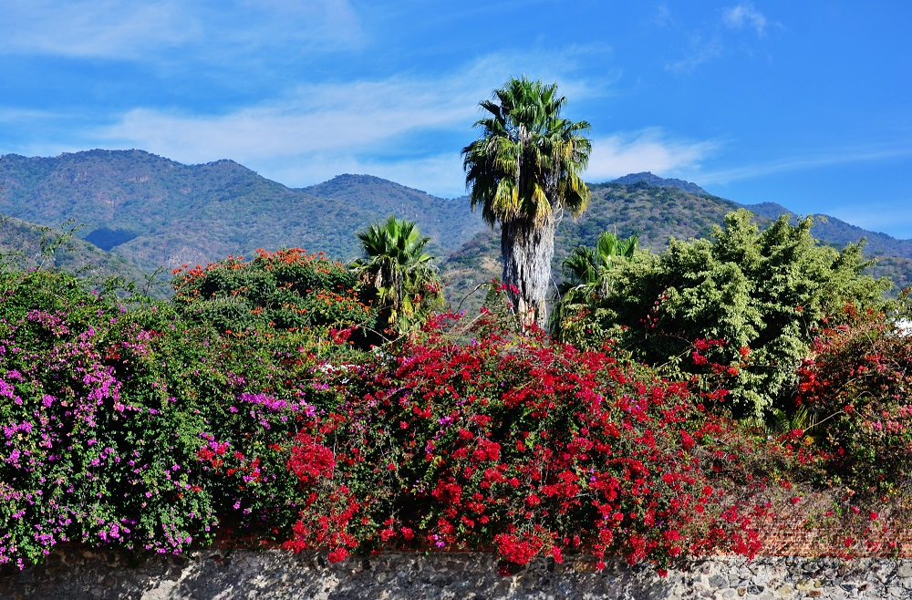 Mexican autumn by Pedro Mx in Member Albums