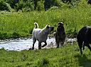 Happy Muddy Dogs by custodian in Member Albums