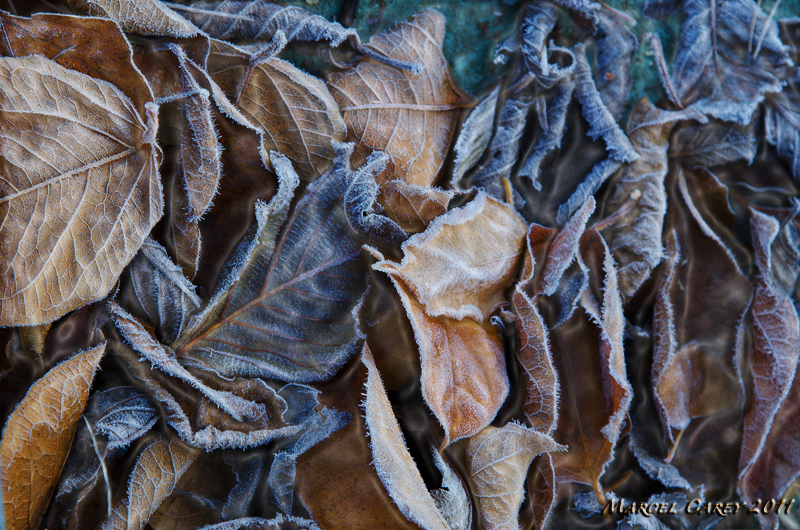automn leaves by Marcel in Member Albums