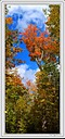 automne pano verticale by Marcel in Member Albums