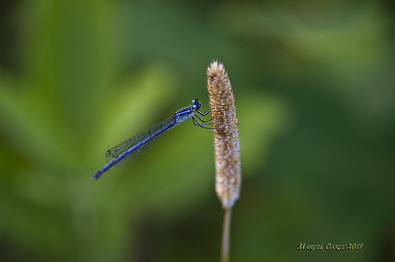 dragonfly 3 by Marcel in Member Albums