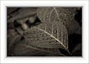 feuiles mouill e d automne by Marcel in Member Albums