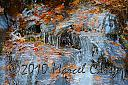 Ice and leaves by Marcel in Member Albums
