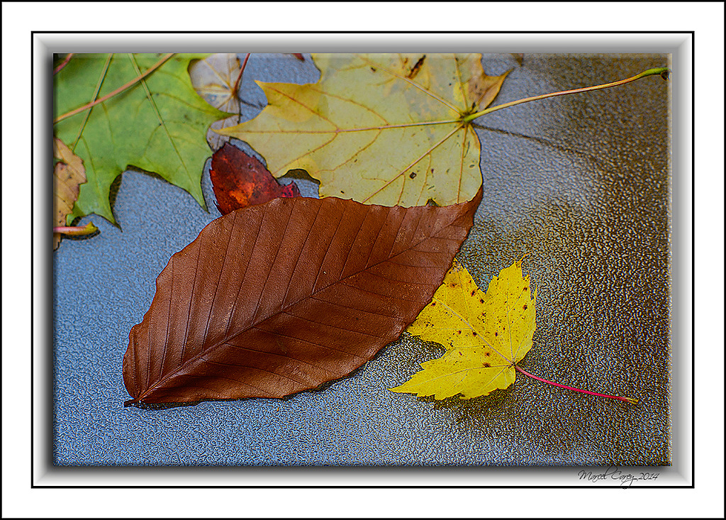 leaves waiting for winter by Marcel in Member Albums