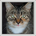 Le Chat by Marcel in Member Albums