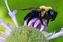 LG Macro Bee by 10 Gauge in Member Albums