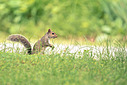 Squirrel by 10 Gauge in Member Albums