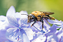 Macro Bee by 10 Gauge in Member Albums