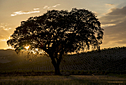 Heart of a Tree by Kathy Kelly in Member Albums