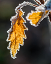 Fringed in Frost by dlwilliams48 in Member Albums