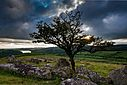 Tree over Burrator by TimR in Member Albums