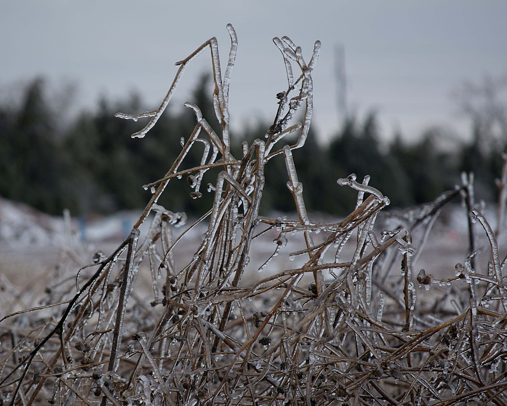 December 2015 Ice Storm by C. Hand in Member Albums