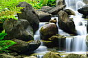 Fern near Waterfall at Deer Park Perdana Botanical Garden, Kuala Lumpur by Joy R in Member Albums