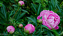 flowers and bug by RobHD in Member Albums