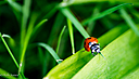 ladybug1 by RobHD in Member Albums