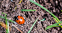ladybug3 by RobHD in Member Albums