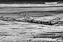 B&W driftwood by Bikerbrent in Bikerbrent 2017