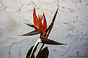 Bird of Paradise by Bikerbrent in Member Albums
