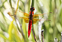 Dragonfly by Bikerbrent in Member Albums