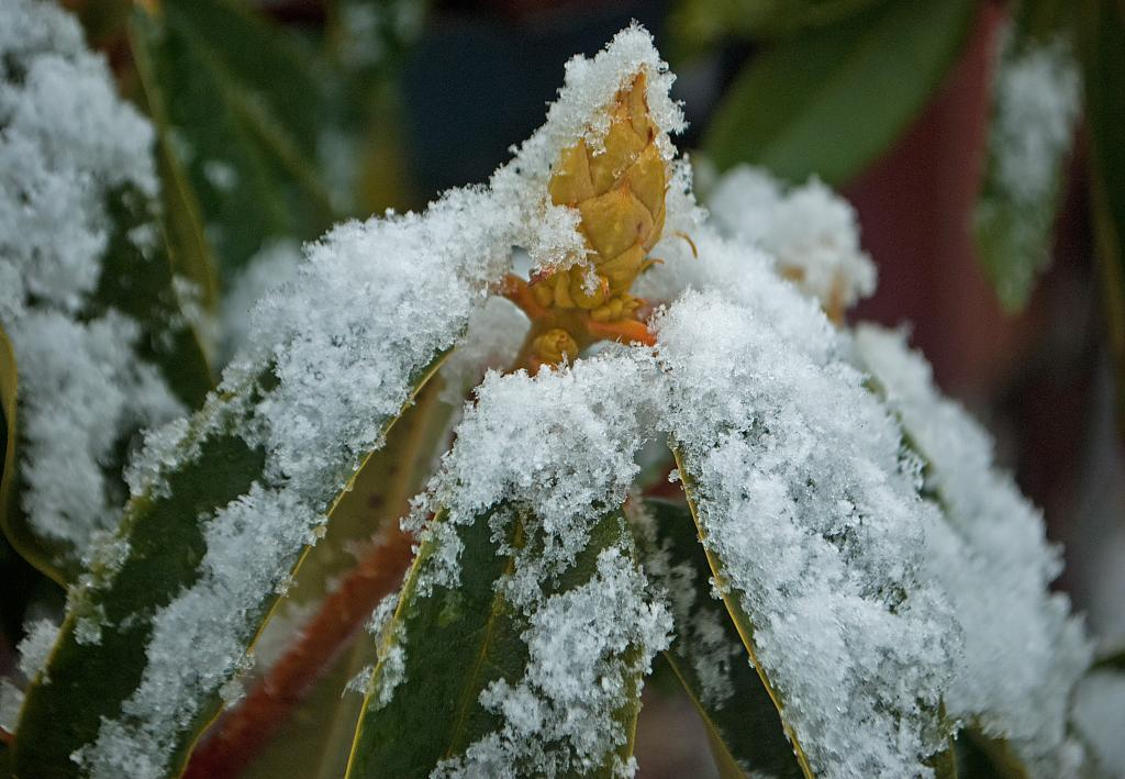 Bud with a winter coat! by jacann40 in Member Albums