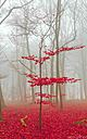 Magic forest in red and white by weshootfood in Member Albums