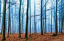 Magic forest in fog in blue and orange by weshootfood in Member Albums