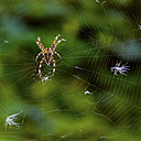 Spider in the web by jtk in Member Albums