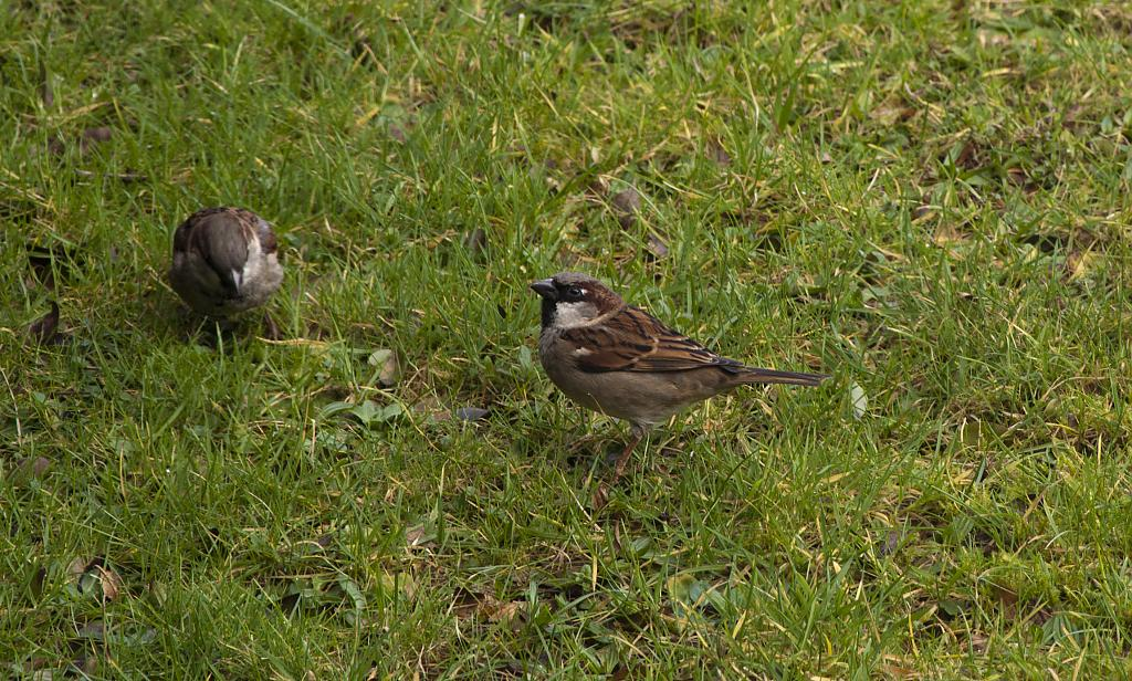 Group of Sparrows by Big E in Small Birds