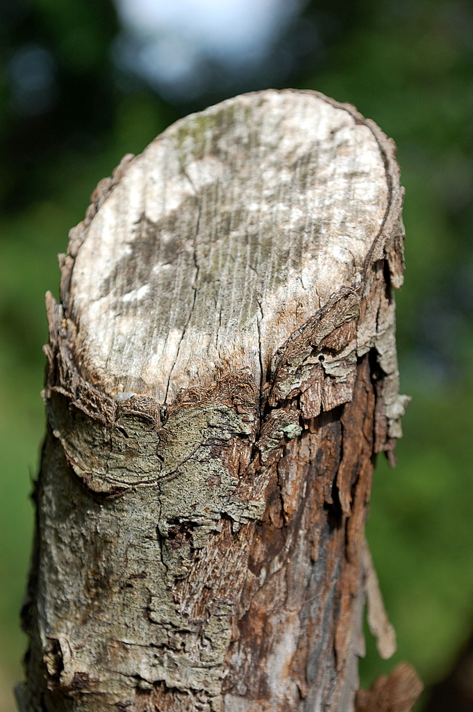 Cut Tree Limb. by dccradio in Member Albums