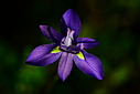 Dutch Iris by Fabrefaction in Member Albums