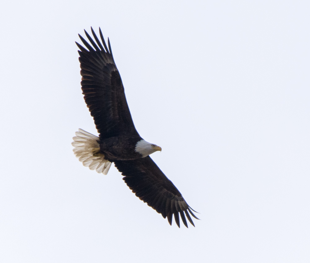 Eagles by Andy W in Member Albums