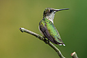 Hummingbird by Robin W in Member Albums