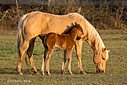 Spring foal by Robin W in Member Albums