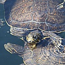 Turtles by Robin W in Member Albums