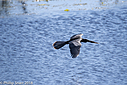 Anhinga by Phil s. in Member Albums