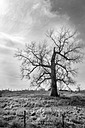 A Lonely Tree by Scot H in Member Albums