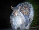 Squirrel in the dark by Peter7100 in Member Albums
