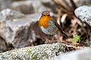 d500 robin by Peter7100 in Member Albums