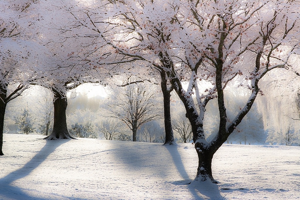 Snow pics by Peter7100 in Member Albums