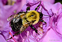 bee by nickt in Member Albums