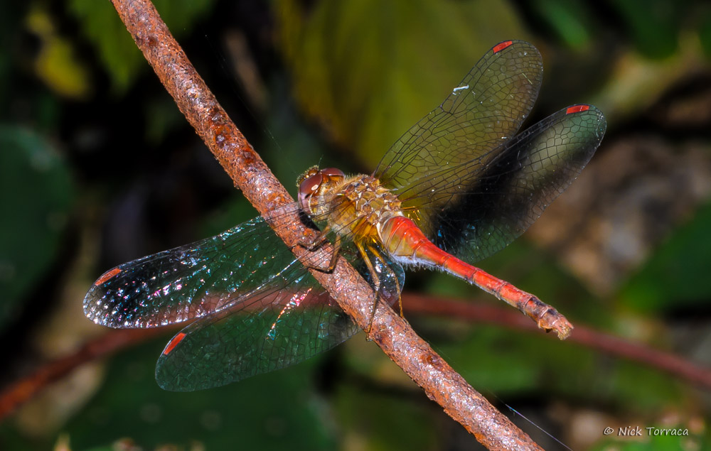 dragonfly by nickt in Member Albums