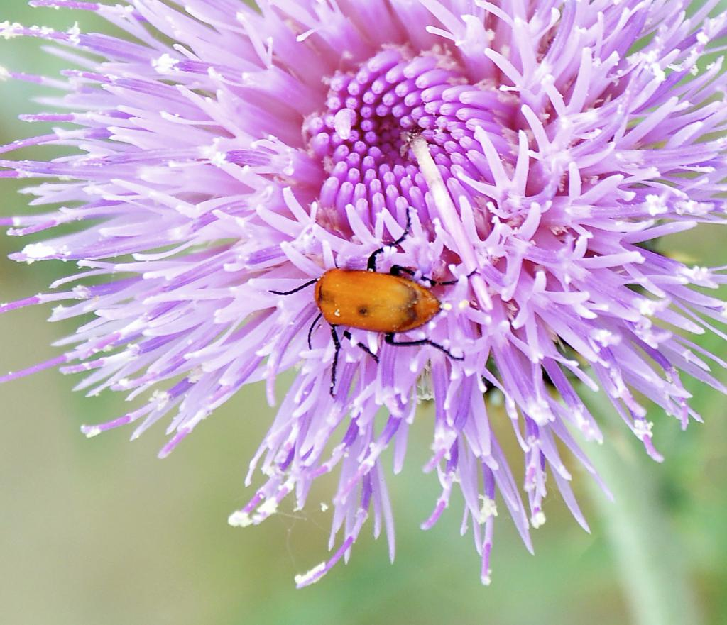 Thistle flower friend by Kim20 in Member Albums