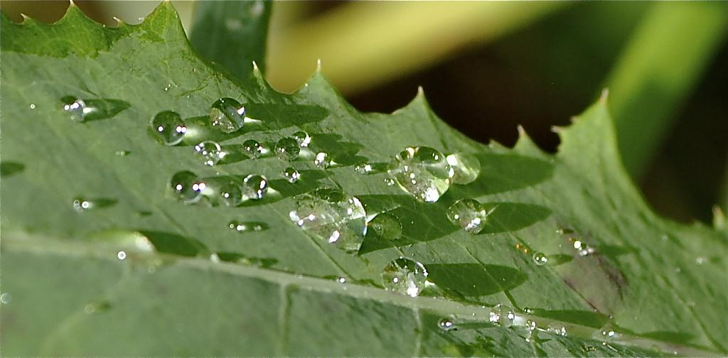 raindrop shadows by Kim20 in Weekly Photo Challenges