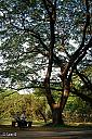 Tree by chinlin57 in Member Albums