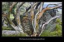 Kosciuszko National Park by Snap Happy in Member Albums