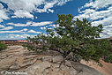 09-07-15 0005-2-edit canyonland nikon d7100 - 1-250 sec at f - 8.0 - iso 100  by Don Kuykendall in Member Albums