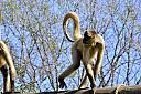 Montgomery Zoo by Don Kuykendall