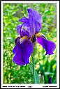 Iris by Don Kuykendall in Member Albums